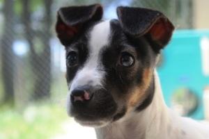 Home For Good Dog Rescue Petfinder