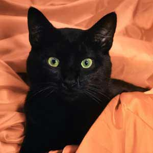 black friday pet